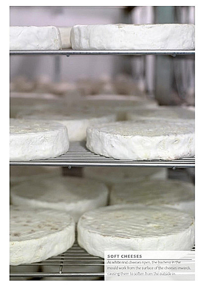 http://jennylinford.co.uk/wp-content/uploads/2015/11/Great_British_Cheeses-new-03.jpg