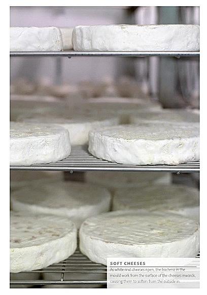 https://jennylinford.co.uk/wp-content/uploads/2015/11/Great_British_Cheeses-new-03.jpg