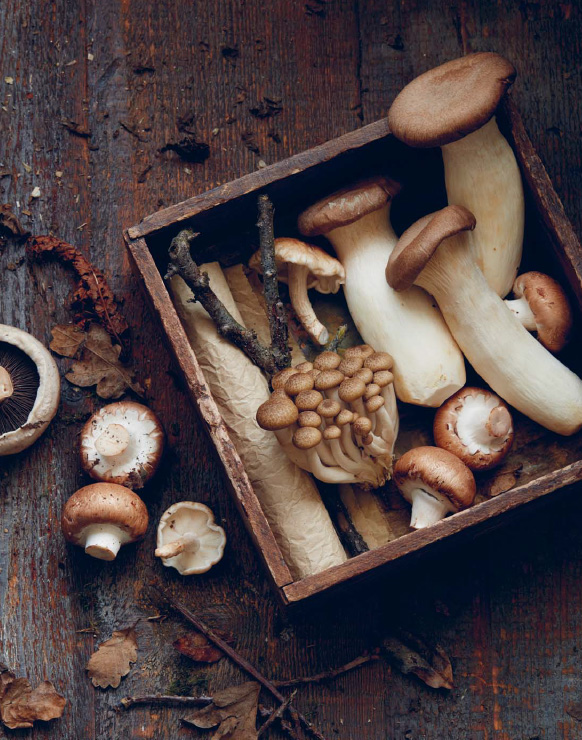 https://jennylinford.co.uk/wp-content/uploads/2018/01/mushrooms-05.jpg